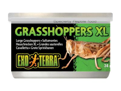 Exo Terra Græshopper XL 34g