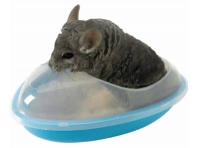 Chinchilla Bad