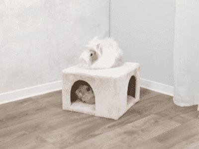 Hyggehule i plys til kaniner og marsvin 3