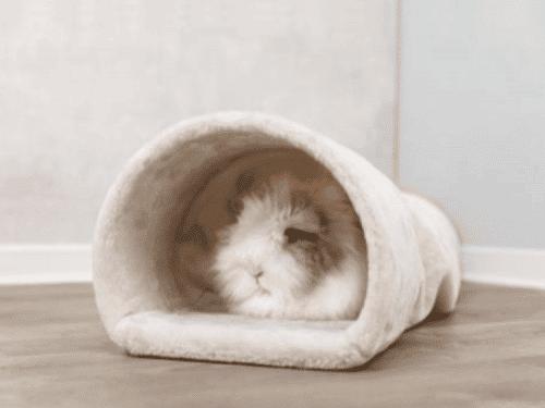 tx63102-1 Hyggetunnel i plys til kaniner & Marsvin
